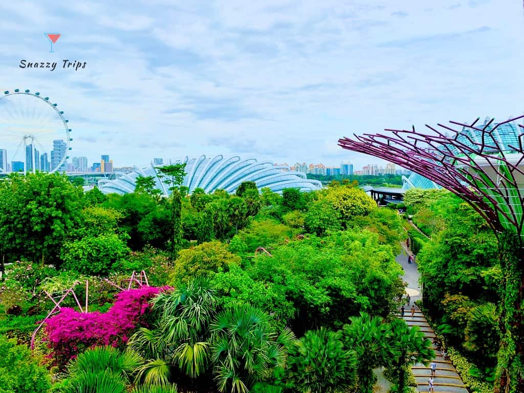 Spectacular Supertrees at Gardens By The Bay