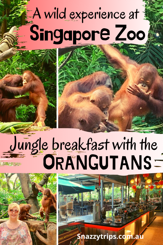 A wild experience at Singapore Zoo Jungle breakfast with the Orangata Snazzy Trips travel blog