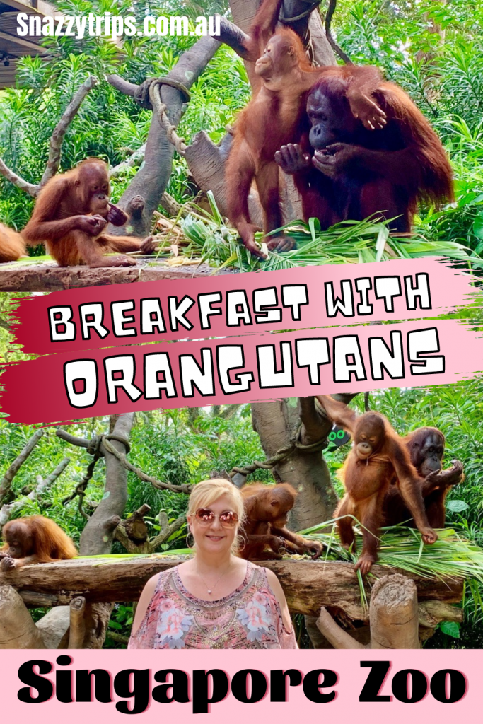 Breakfast with the Orangutans at Singapore Zoo