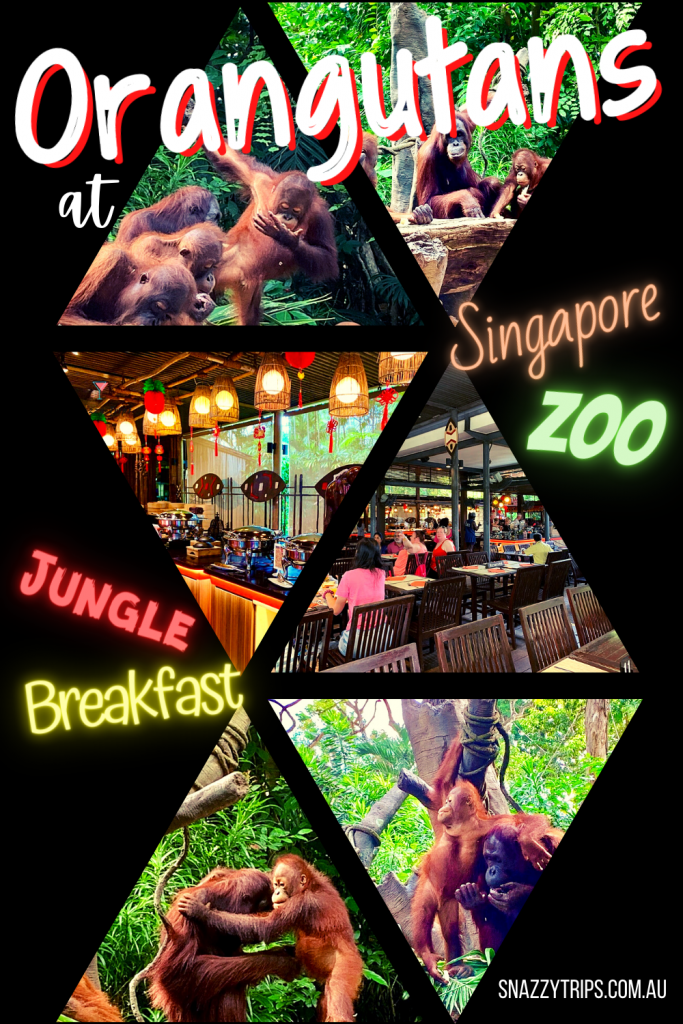 Jungle Breakfast at Singapore Zoo with the Orangutans