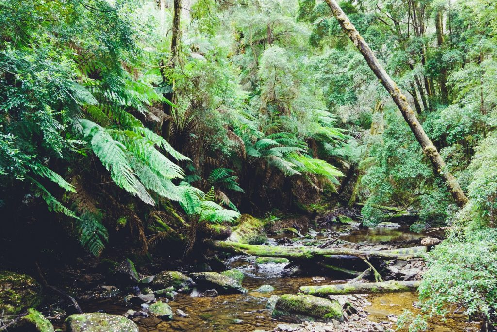 Nelson Falls nature trail Tasmania Snazzy Trips travel blog