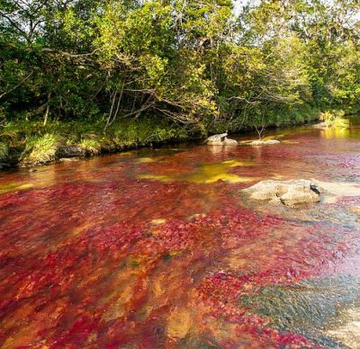 500px-Caño_Cristales_01